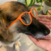 dog with orange eyeglasses for rainbow glasses collection